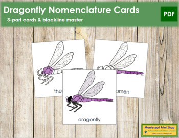 Dragonfly Nomenclature Cards