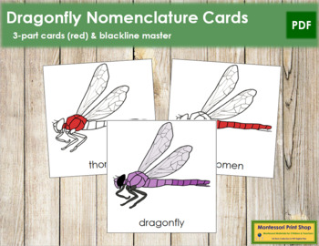 Dragonfly Nomenclature Cards (Red)