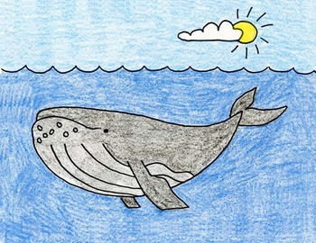 Draw a Humpback Whale