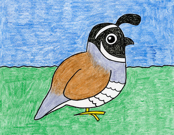 Draw the California State Bird