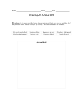 Drawing An Animal Cell