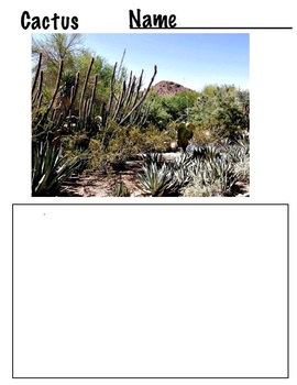 Drawing Cactus from Photos - 8 pages - Line Shape Drawings