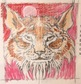 Drawing Carniverous Cats