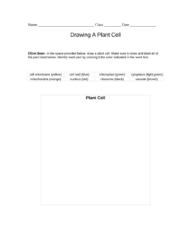Drawing The Plant Cell