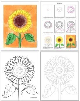 Drawing & Painting: Botanicals