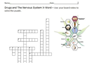 Drugs and the Nervous System X-word and KEY