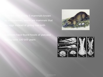 Duck Billed Platypus - Power Point