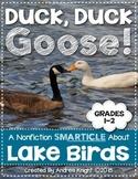 Duck, Duck, Goose!  A Nonfiction SMARTICLE About Lake Birds  (Grades 1-2)