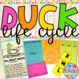 Duck Life Cycle