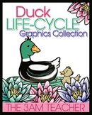 Duck Life-Cycle Graphics / Clip Art