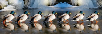 Ducks in a Row- Starting the Day