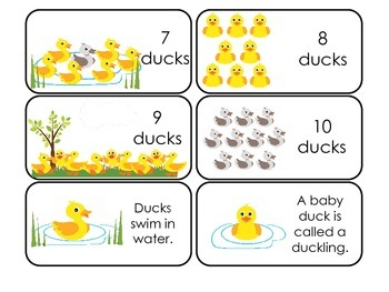 Ducks themed Picture Word and Counting Flash Cards.  Daycare learning.