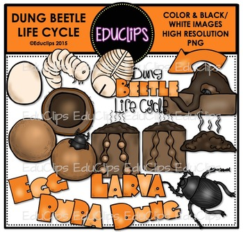 Dung Beetle Life Cycle Clip Art Bundle {Educlips Clipart}