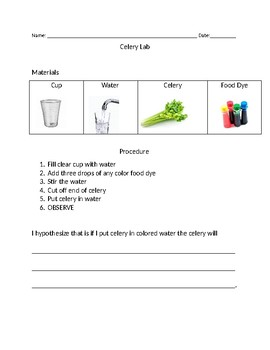 photo about Celery Experiment Printable Worksheet called Celery Experiment Worksheets Education Elements TpT