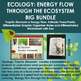 ECOLOGY BIG BUNDLE: Trophic Elements, Energy Flow with PPT, Notes & Worksheets