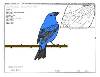 ECOLOGY BIRDS ID 02 SURFFDOGGY