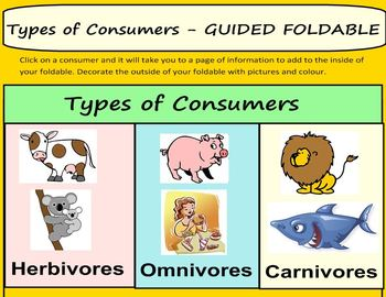 ECOLOGY: Producers and Types of Consumers