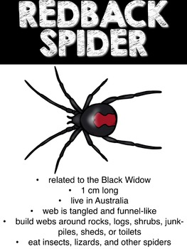 EEKKK!!!  Spiders!  Activities for a Nonfiction Unit!