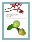 EFFICACIOUS PLANTS 26