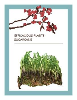 EFFICACIOUS PLANTS 31
