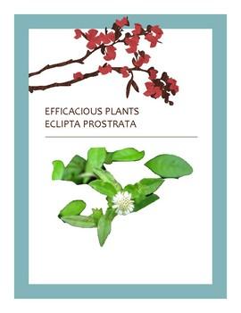 EFFICACIOUS PLANTS 37