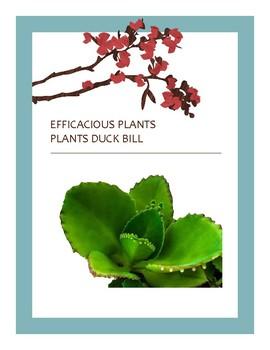 EFFICACIOUS PLANTS XXV