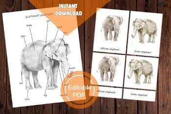 ELEPHANT Anatomy / Editable Watercolor / Homeschool Printable / Body Parts /