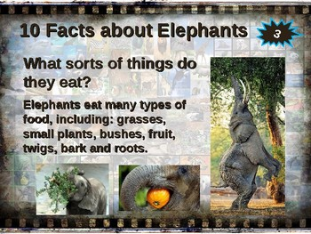 ELEPHANTS: 10 facts. Fun, engaging PPT (w links & free graphic organizer)