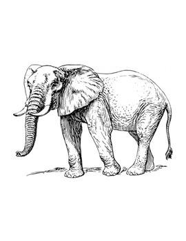 ELEPHANTS (GRADES 4 - 5)