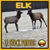 ELK Wildlife Stock Photos Set One