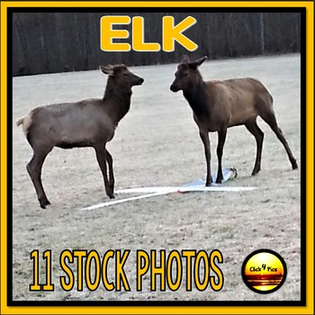 Great Smoky Mountains ELK Stock Photos {Set One} for Commercial Use