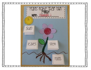 ENERGY! Photosynthesis, Producers, Consumers, Food Chains and More!