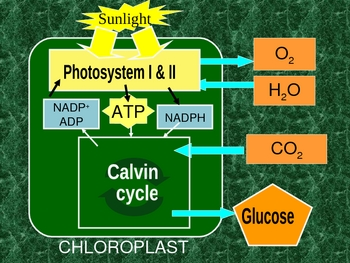 ENERGY in CELL