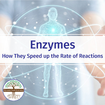 ENZYMES - Video Guide for Biology Students