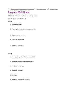 ENZYMES: Web Quest