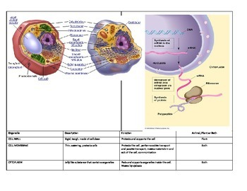 EOC STAAR REVIEW-Cell Structure and Function