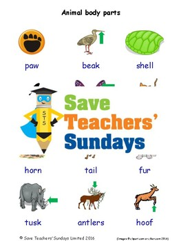 ESL Animal Body Parts Worksheets, Games, Activities and Flash Cards (with audio)