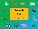 ESL Animals Bingo – The Animals in English