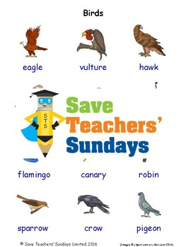 ESL Birds Worksheets, Games, Activities and Flash Cards (with audio)