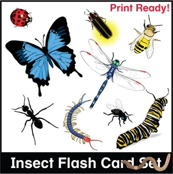 ESL Flash Cards-Insects