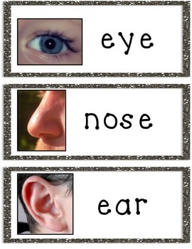 ESL Newcomers Parts of the Face: Vocabulary Cards and Worksheets