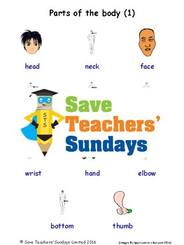 ESL Parts of The Body Worksheets, Games, Activities & Flash Cards (with audio) 1