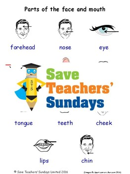 ESL Parts of the Face Worksheets, Games, Activities and Flash Cards (with audio)