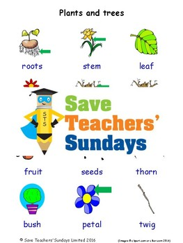 ESL Plants and Trees Worksheets, Games, Activities and Flash Cards (with audio)