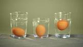 ESL Science - Floating Eggs - sink and float