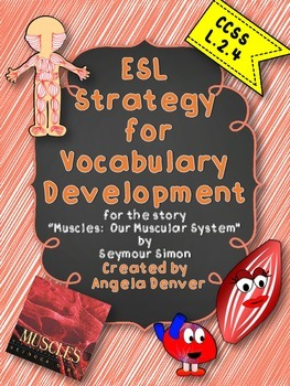 ESL Strategy for Vocabulary Development for Muscles: Our Muscular System