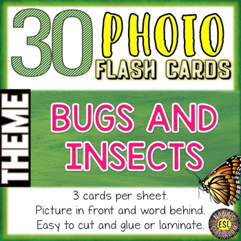 Bugs and Insects Photo Flash Cards