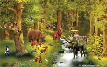 Discover Forests (Animals) Level I (SMART BOARD FILE)