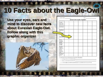 EURASIAN EAGLE-OWL: 10 facts. Engaging PPT (w links & free