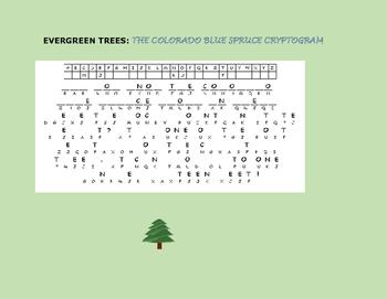 EVERGREEN TREES: THE COLORADO BLUE SPRUCE CRYPTOGRAM